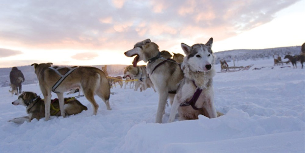 IceHotel Dogsled