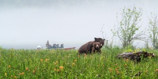 Grizzly Bears and boat