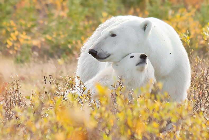 Canadian Arctic Safaris